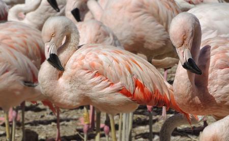 Reserve Africaine de Sigean Flamingos