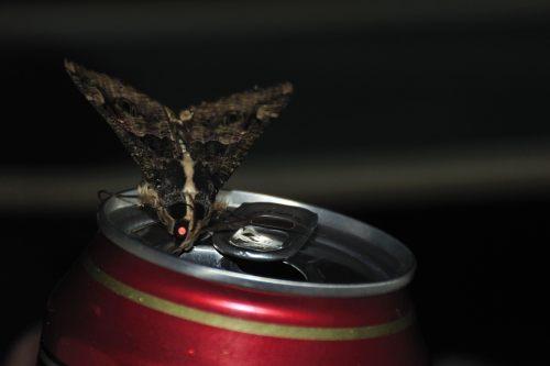 Alkoholiker...