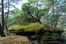 Dahner-Felsenland