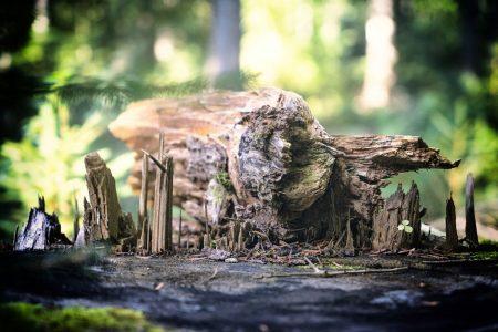 Wald bei Freudenstadt
