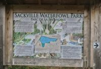 Sackville Waterfowl
