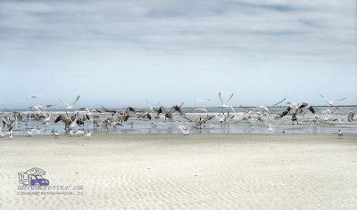 Hugenot Strand