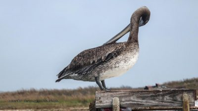Pelikan Putzstunde