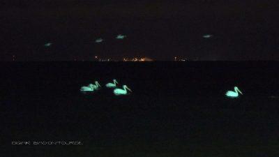 Pelikane in der Nacht