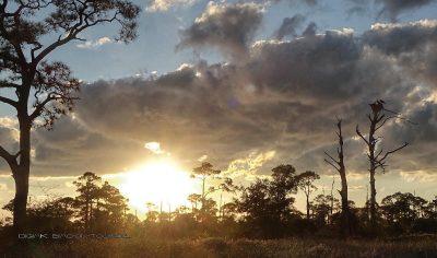 Sonnenuntergang mit Seeadler