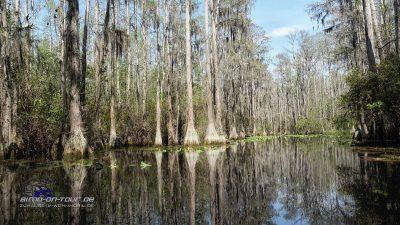 Suwanee Swamp