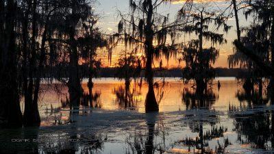 Swamp Abendglühen