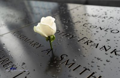 9-11 Trauerrose