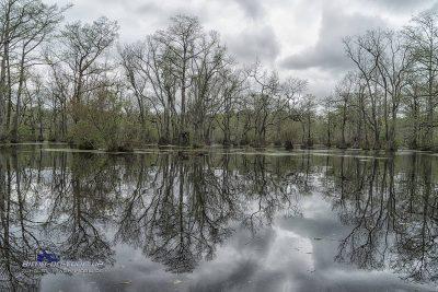 Millpond Swamp