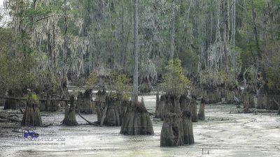 Santee Sumpf