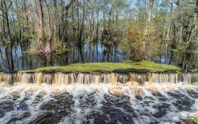 Swamp-Trail
