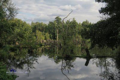 Brueggener Swamp