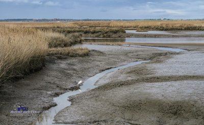 Pril bei Le Teich