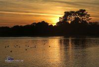 Arousa-Sonnenuntergang-Möven