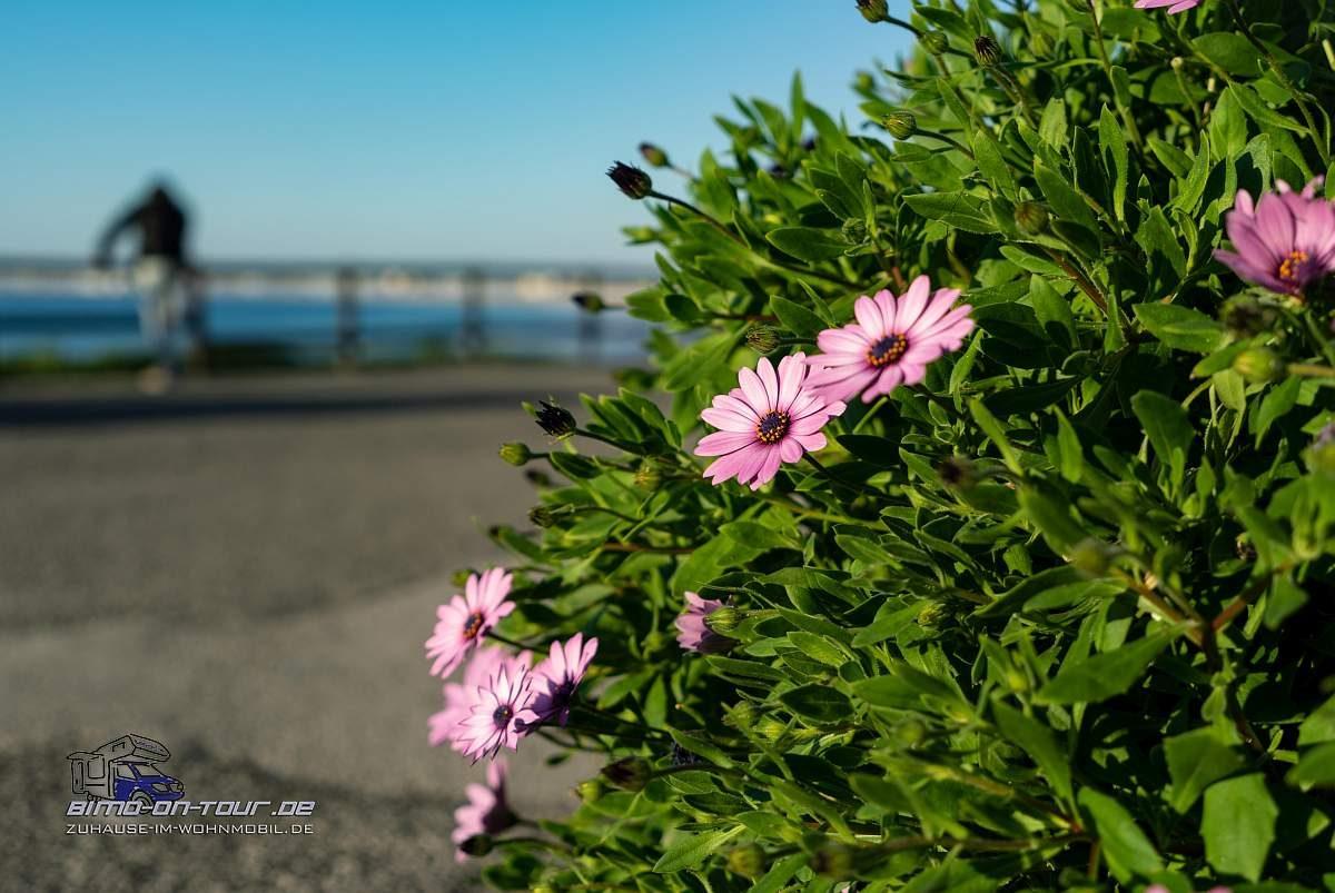 Consolacao-Blumen