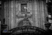 Kirche-Taube