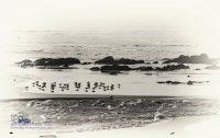 Möven am Meer