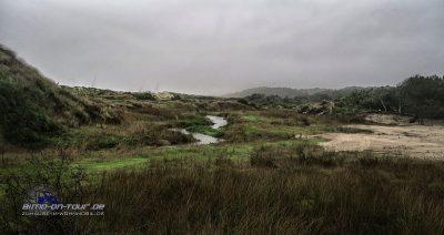 Praia de Rodanho-Dünen