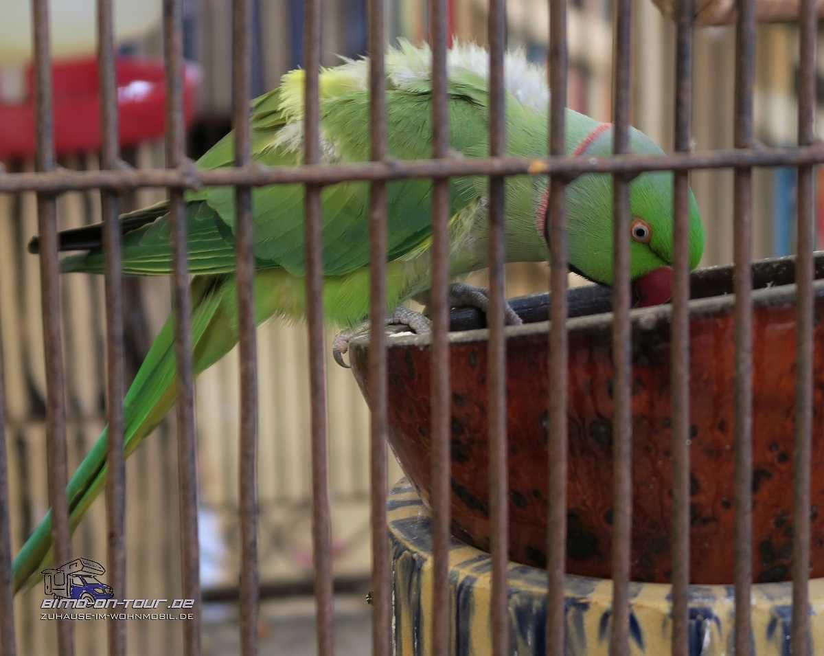 Mikki`s Place-Papagei