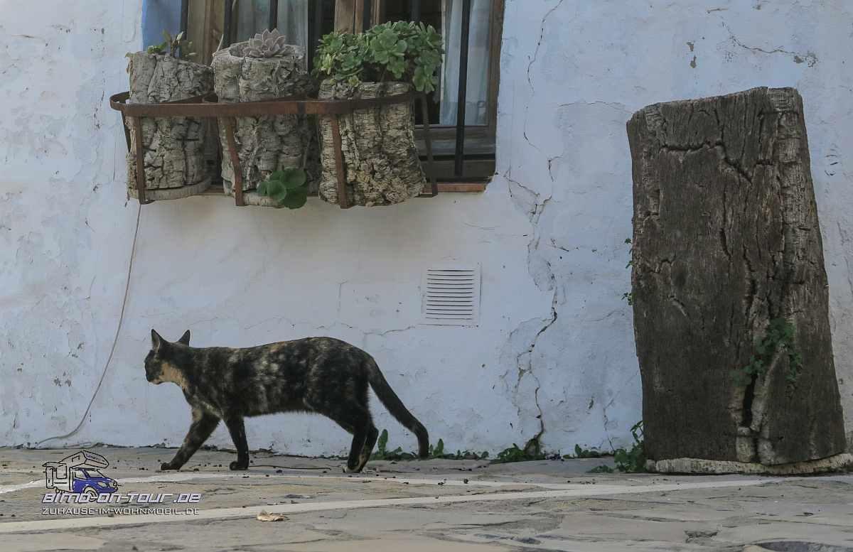 Benarraba-Katze