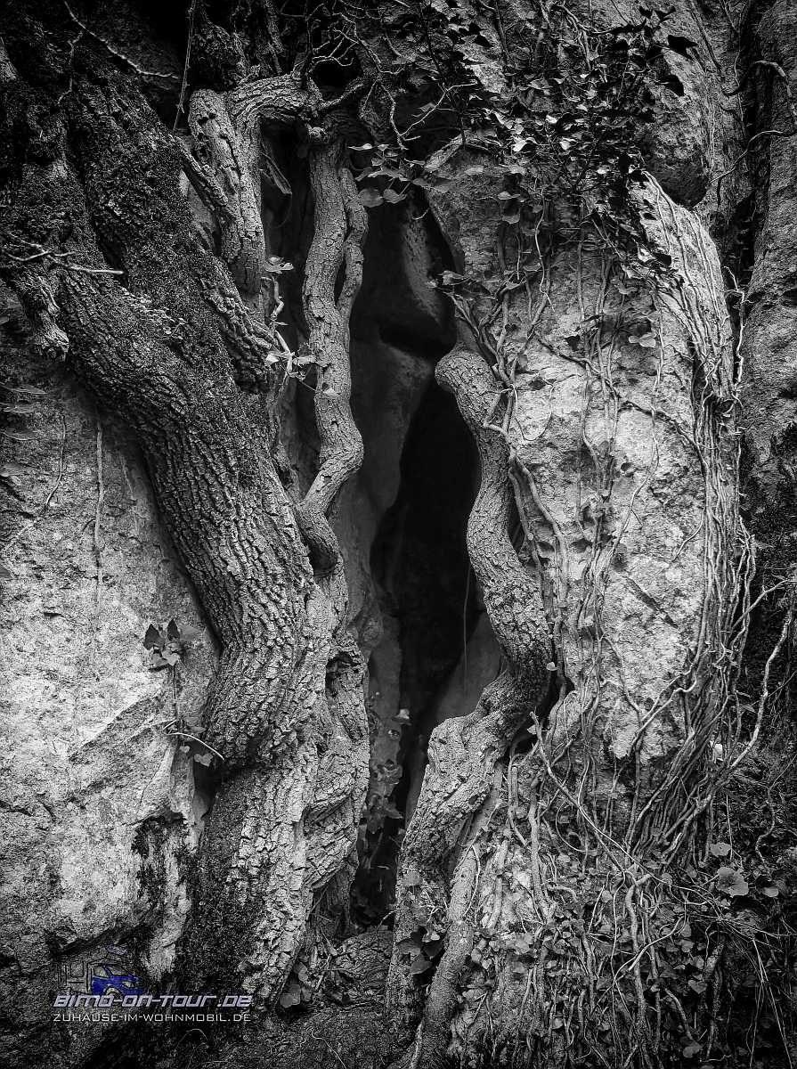 El Torcal-Baum