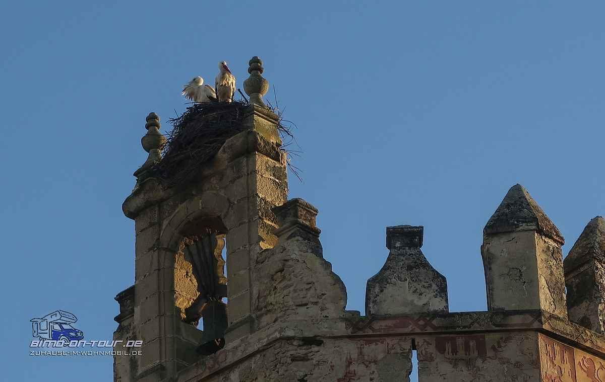 Puerte de Santa Maria - Störche