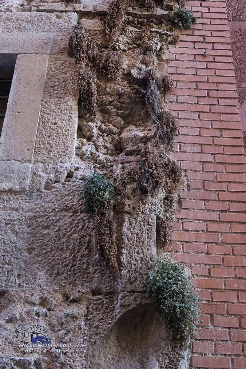 Cuenca-Hausblumen