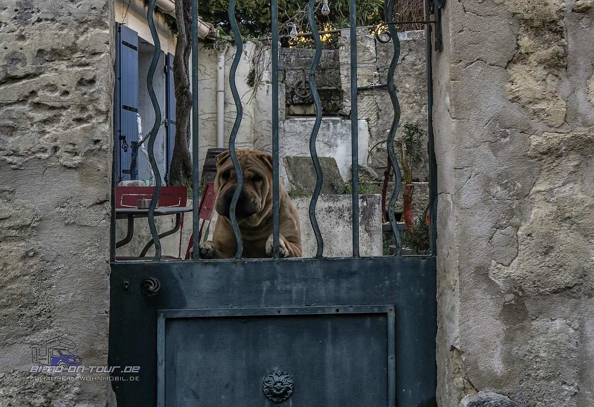 Fontvieille-Wachhund