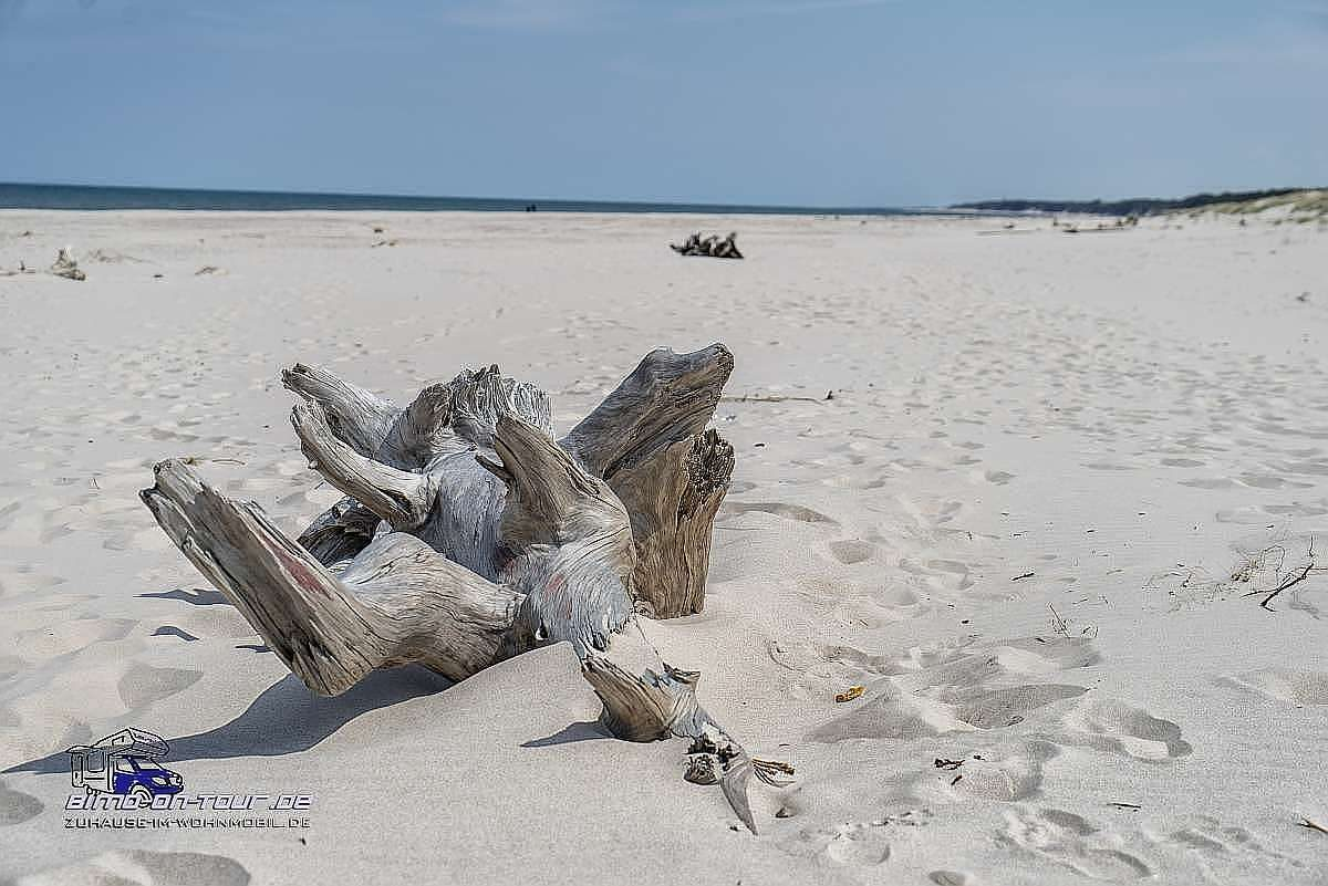 Leba-Baumstumpf am Strand