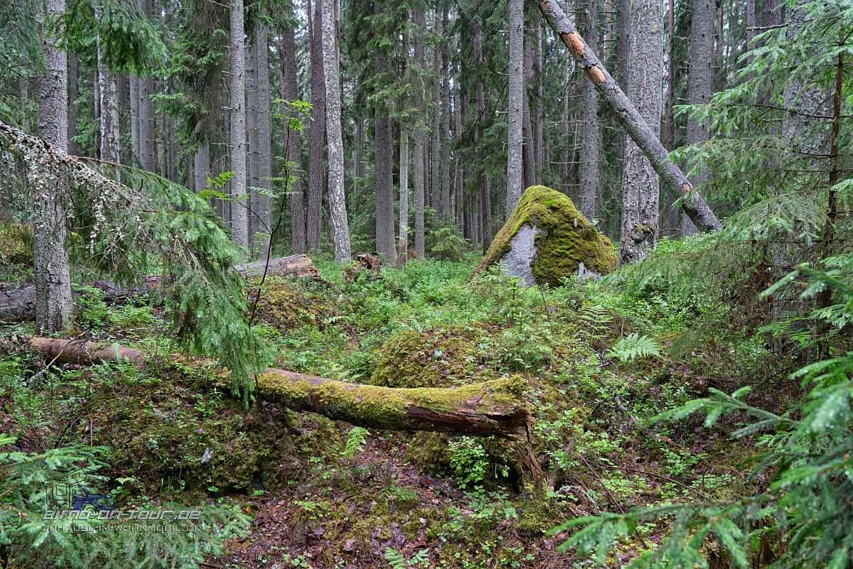 Fels im Wald