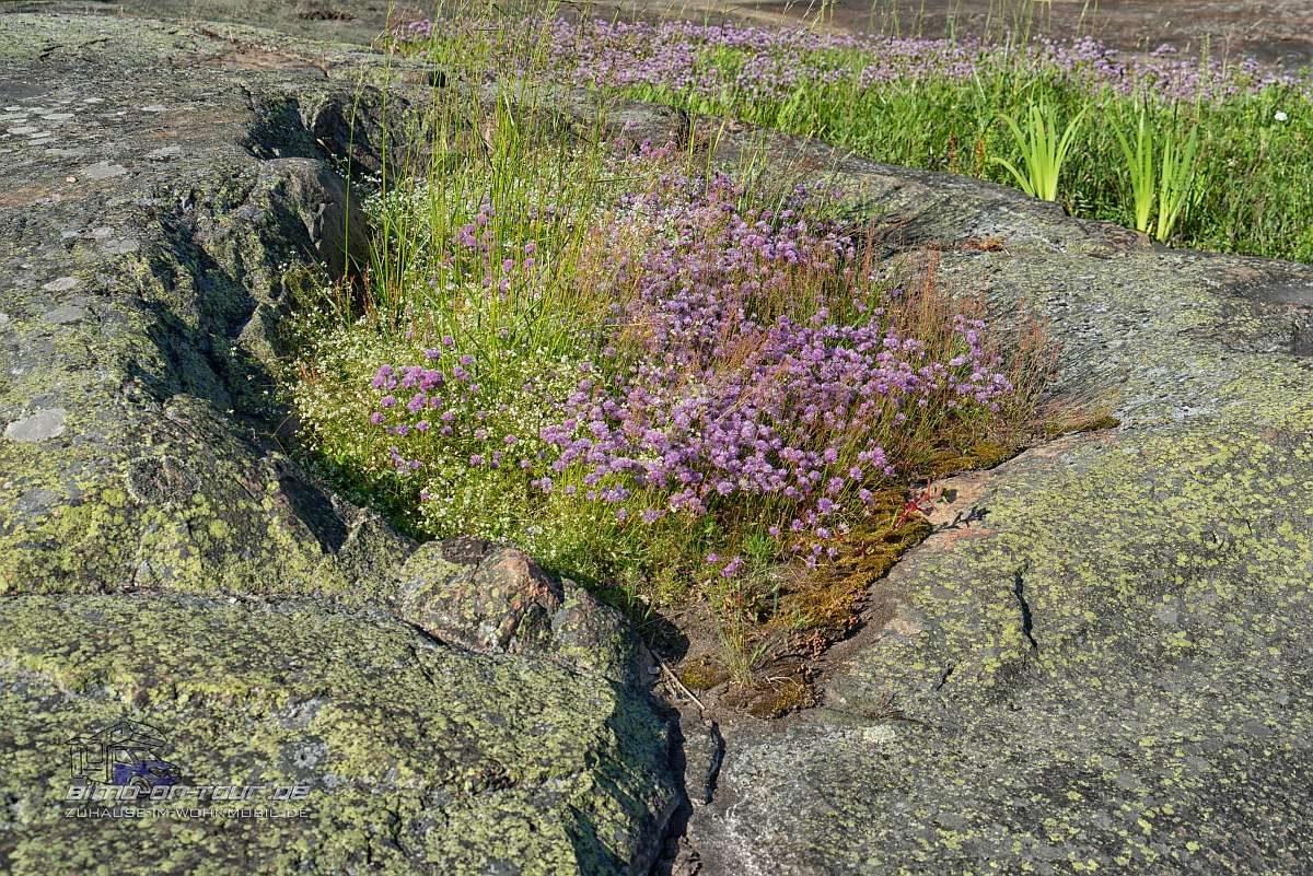 Kopparnäs-Blumen