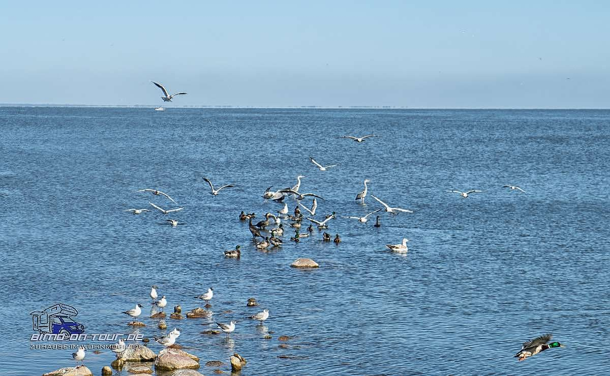 Nidda-Vogeltreffen