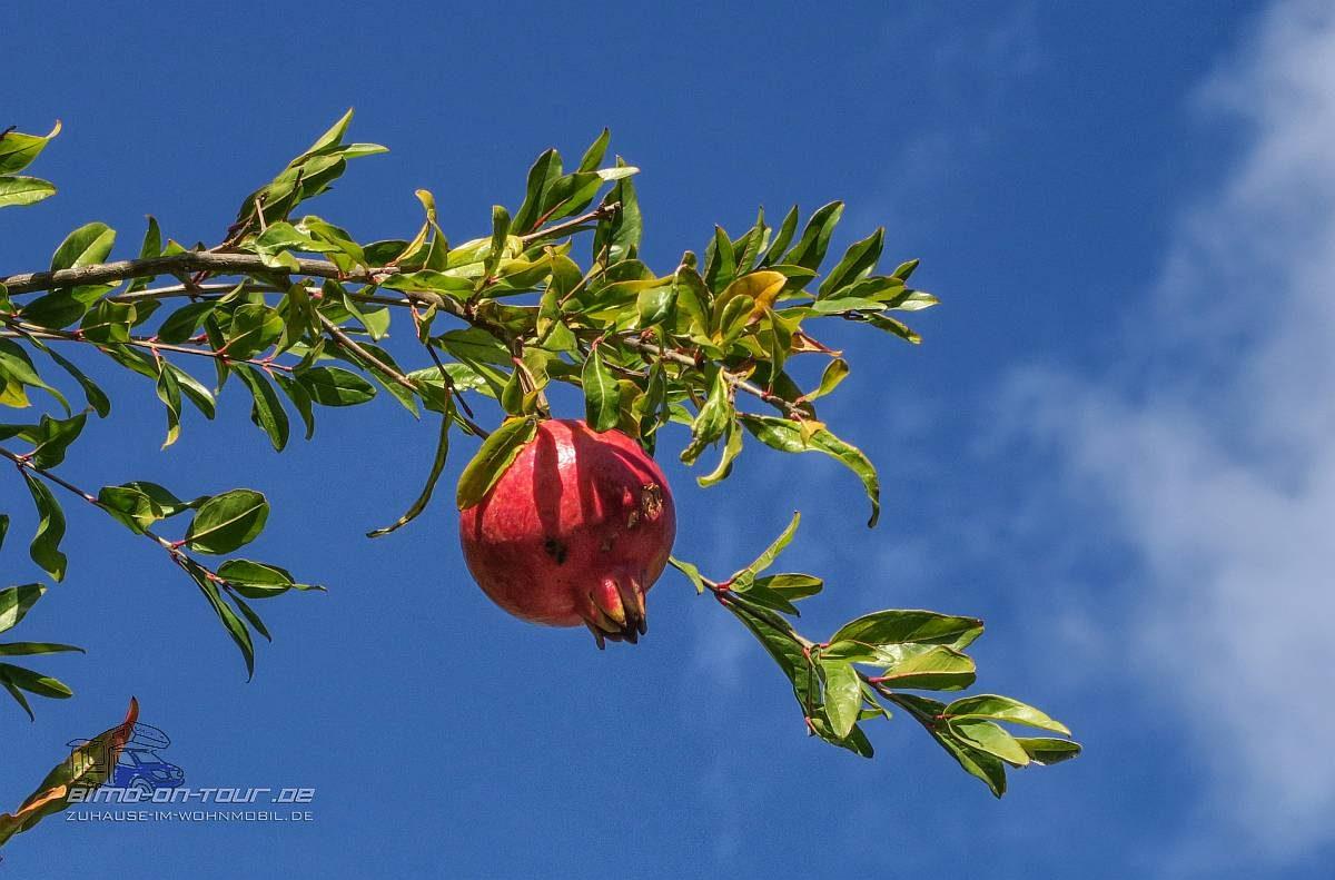 Eus-Granatapfel