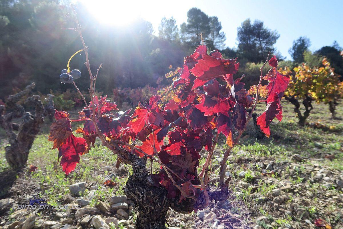 Minerve-Wein