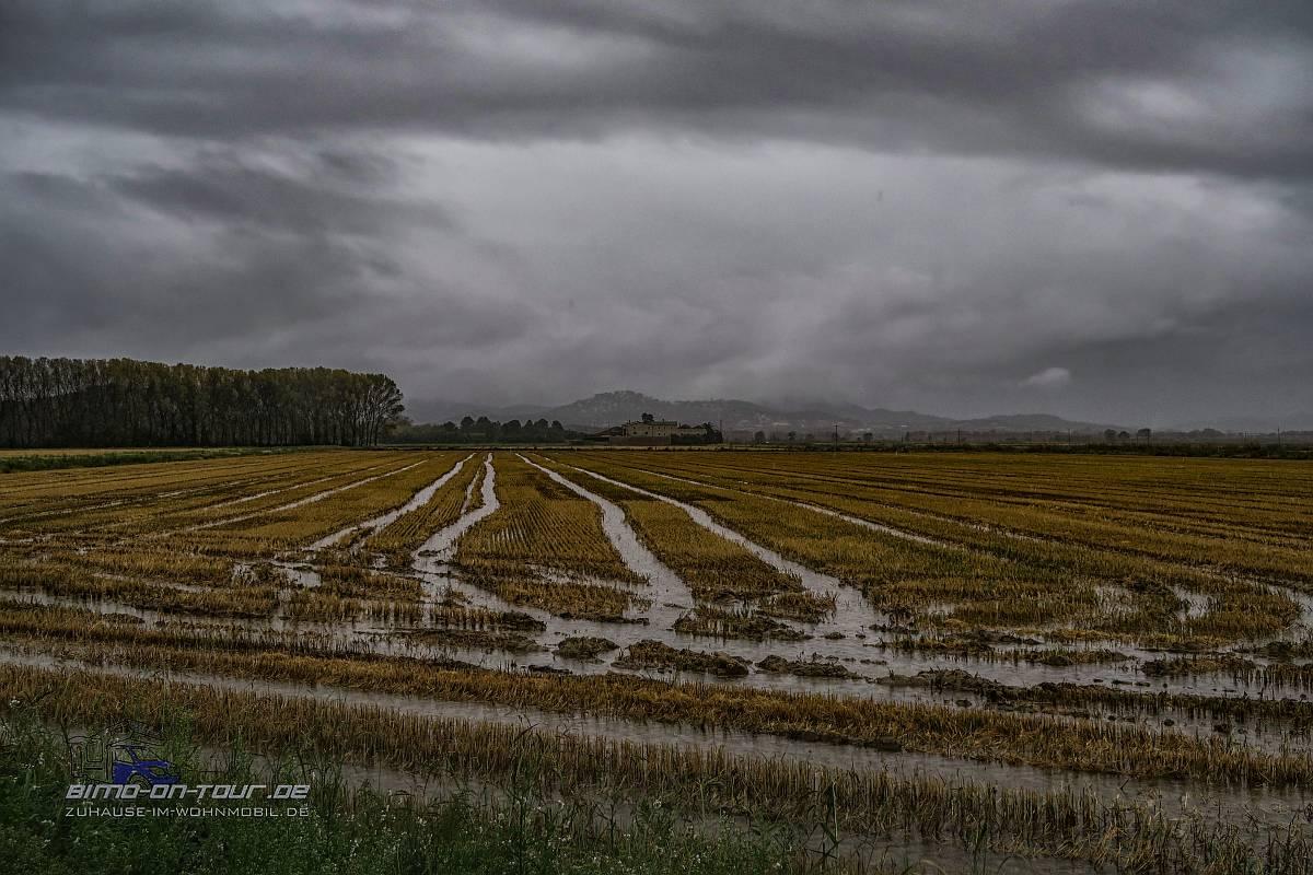 Regenfeld