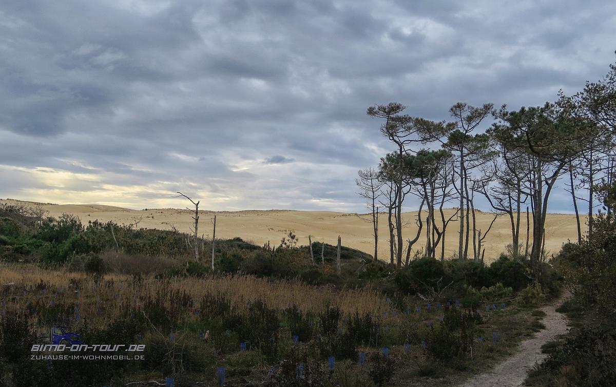 Dünen und Heidelandschaft