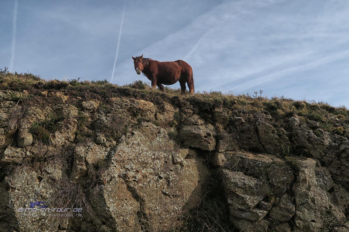 Pyrenäen-Wildpferd