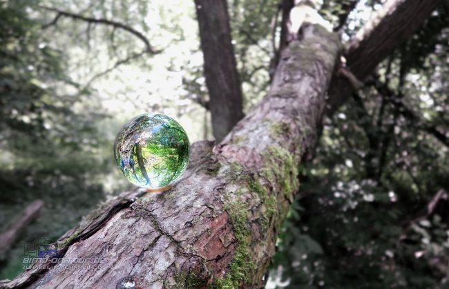 Lensball Glaskugel im Wald