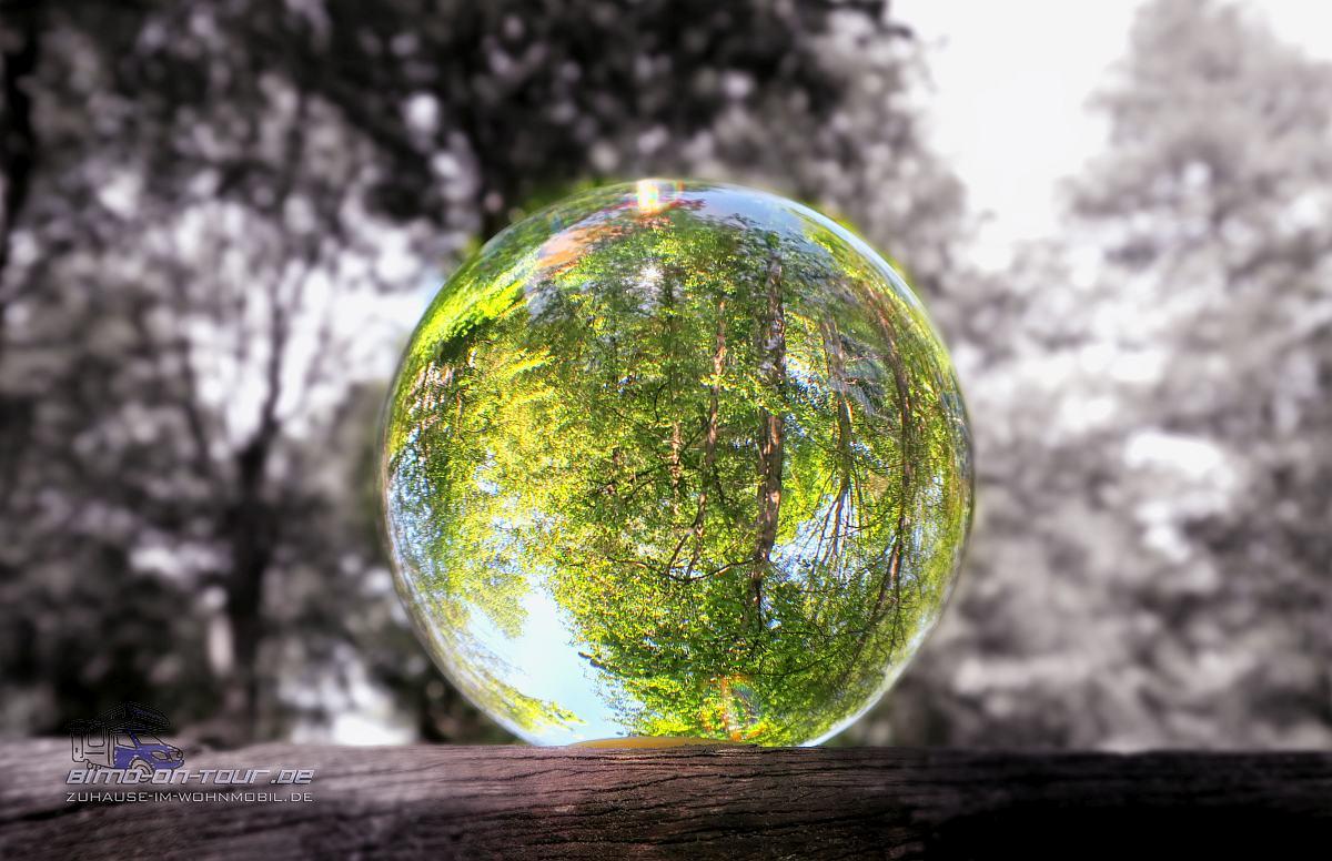 Lensball/Glaskugel im Wald