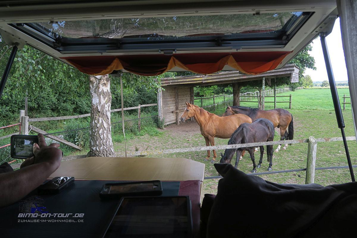 Grossenwieden-Pferde