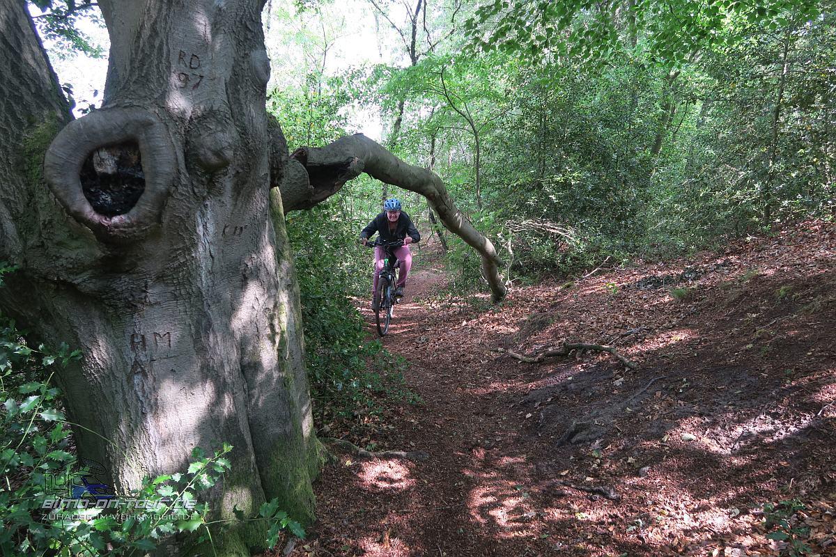 Waldweg-BMX