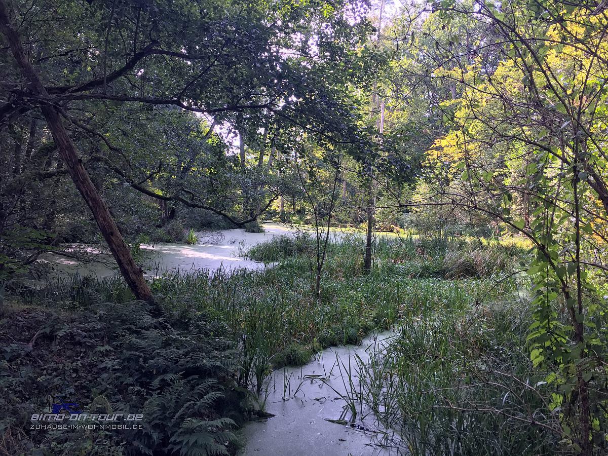 Biosphärenreservat Schorfheide