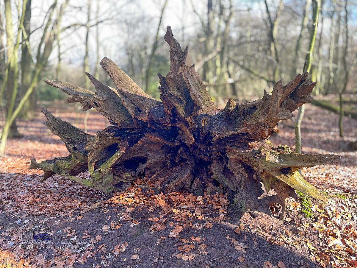 Barneführer Holz