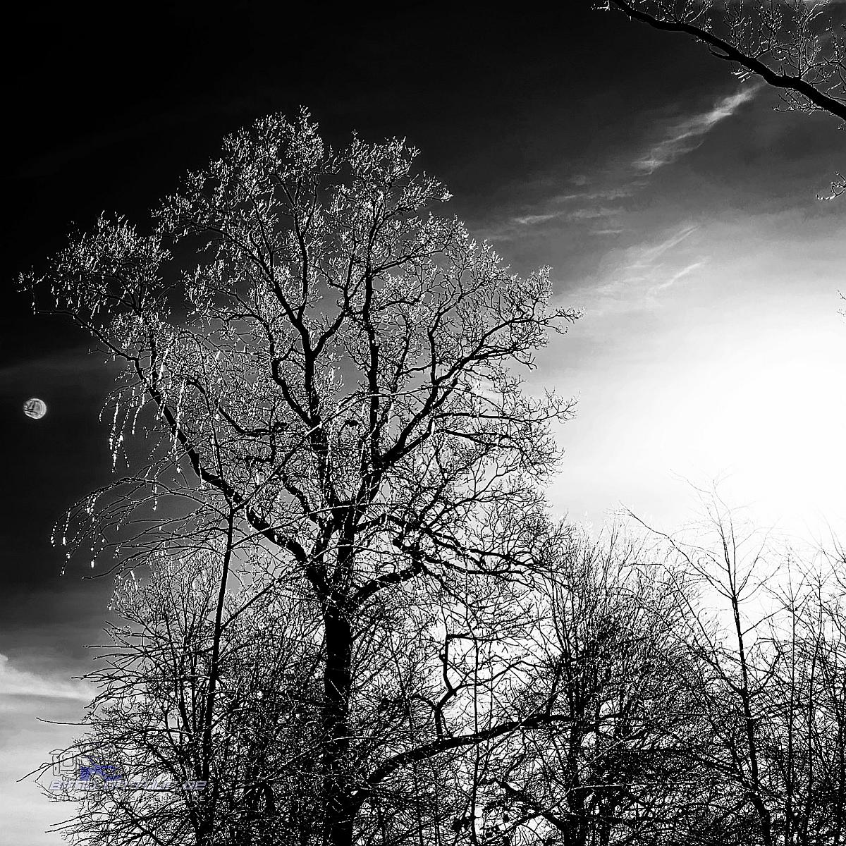 Ipweger Moor im Winter