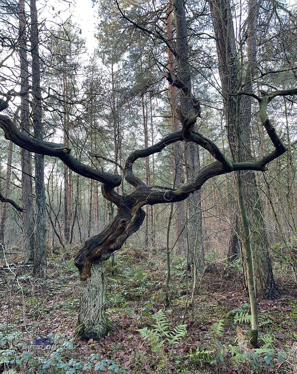Mansholter Holz