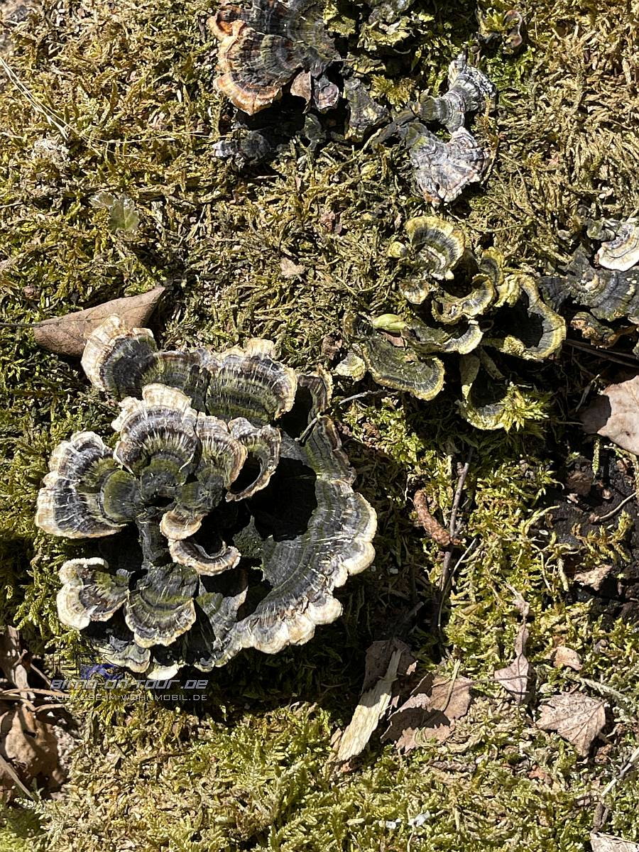 Thülsfelder Talsperre Pilze