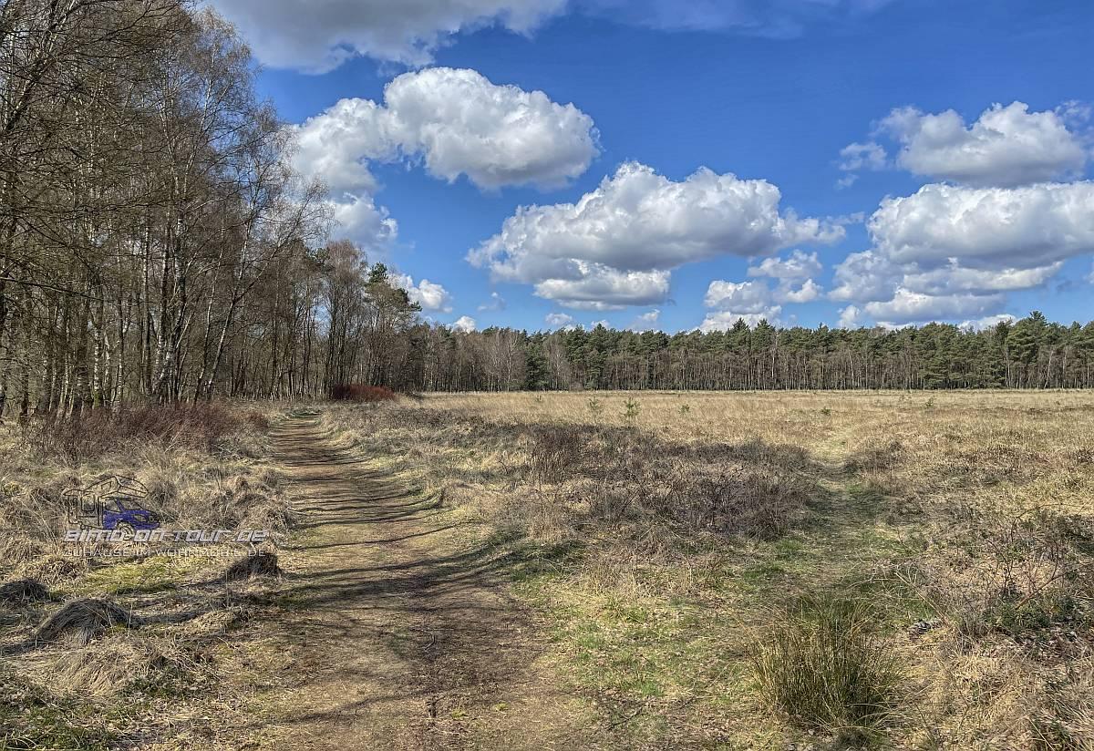 Thülsfelder Talsperre Heidelandschaft