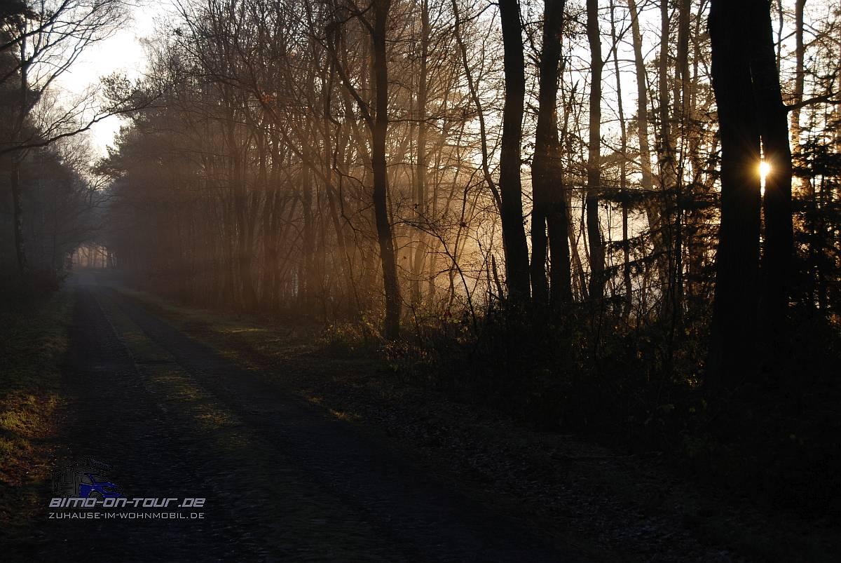 Waldweg im Abendlicht