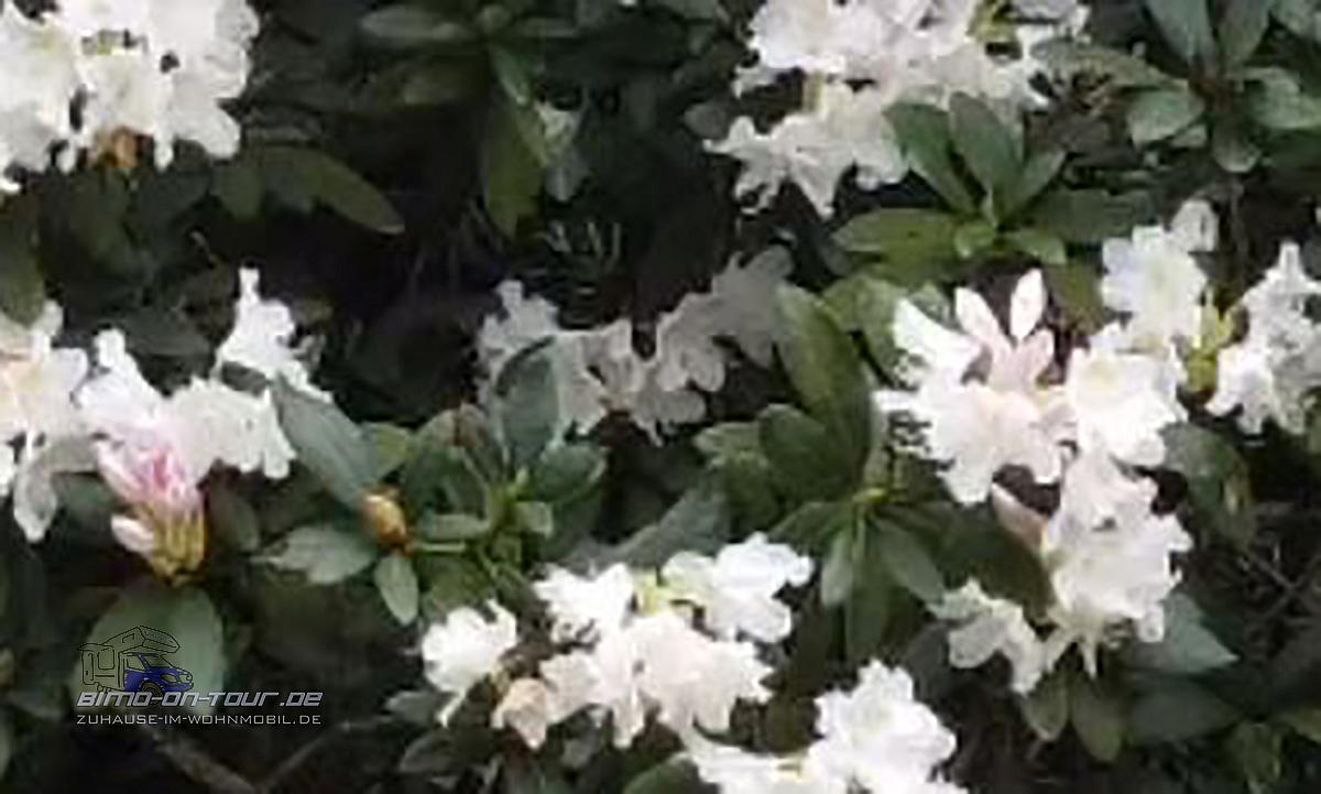Mavic mini 2-Video 4k-Ausschnitt