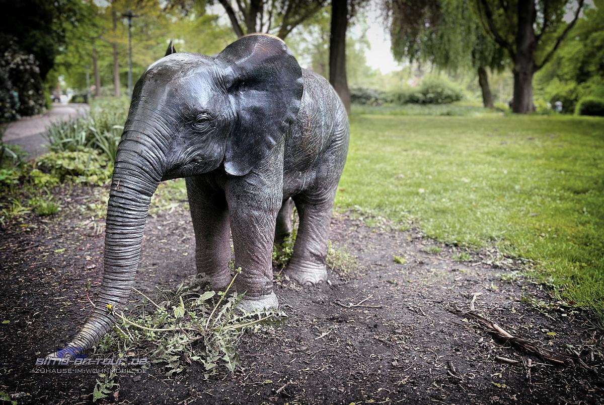 Stade-Elefant